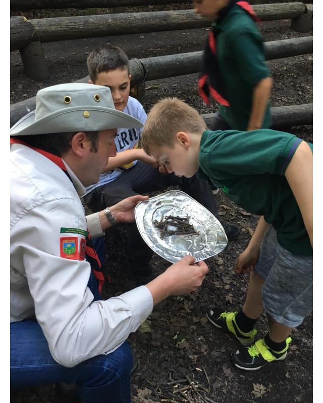 Cubs looking at silver foil plate